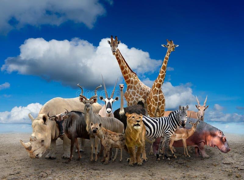 Группа в составе животные Африки стоковая фотография rf
