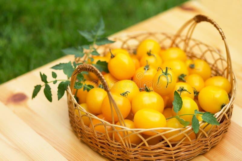 Группа в составе зрелые красные и желтые томаты вишни стоковые фотографии rf