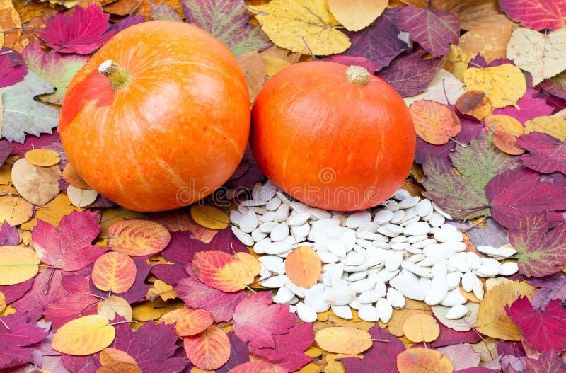 Группа в составе зрелые тыквы на листьях осени стоковое изображение