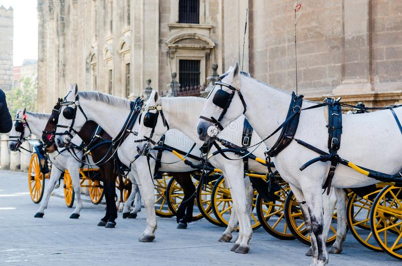 Группа в составе испанский экипаж белых лошадей перед котом Севильи стоковые фотографии rf