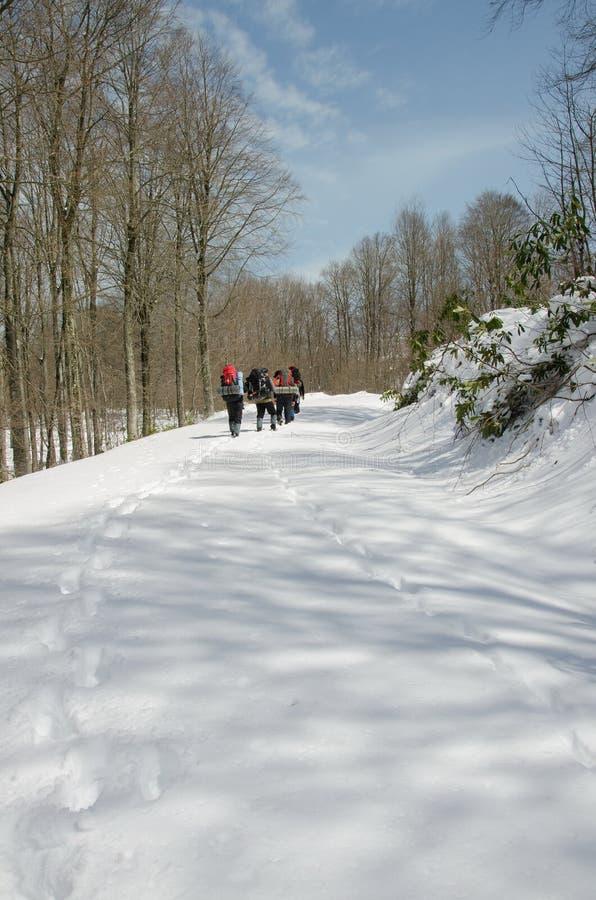 Группа в составе идти hikers стоковое изображение rf