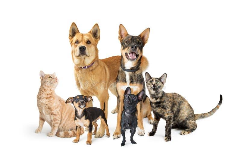 Группа в составе коты и собаки смотря вверх на белизне стоковые фото