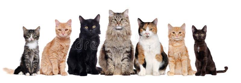 Группа в составе коты различных пород сидя в сырцовом стоковое изображение rf