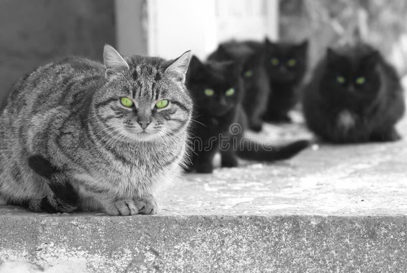 Группа в составе коты стоковое изображение