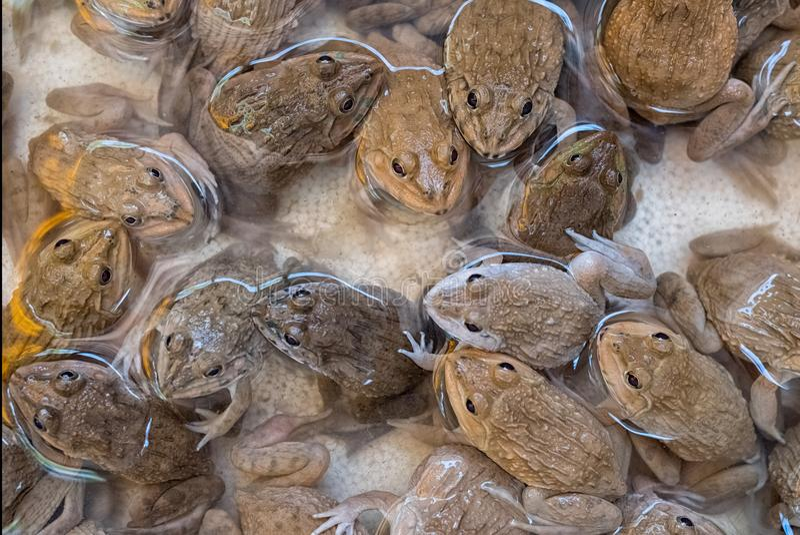 Группа в составе лягушки стоковое фото rf