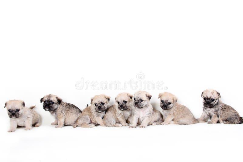 Группа в составе милые щенята на белой предпосылке стоковые изображения