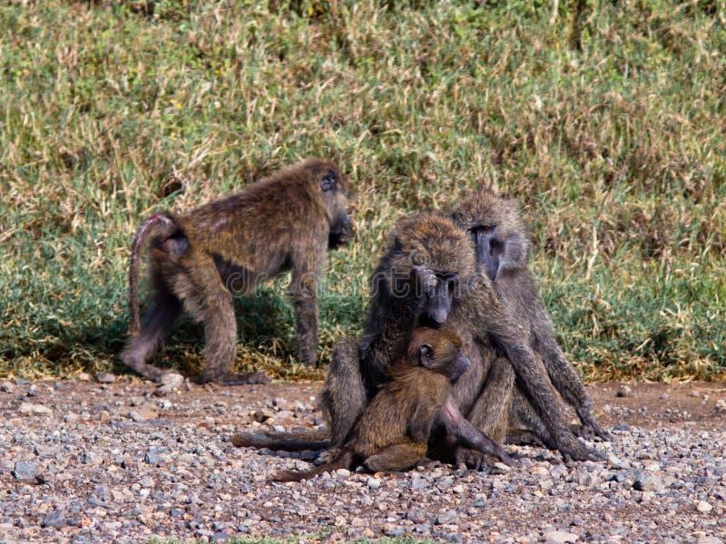 Группа в составе обезьяны сидя в траве стоковое фото rf