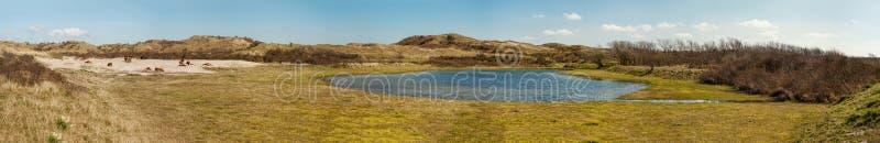 Группа в составе одичалые лошади Konik около dunelake в северном Holla стоковые фотографии rf