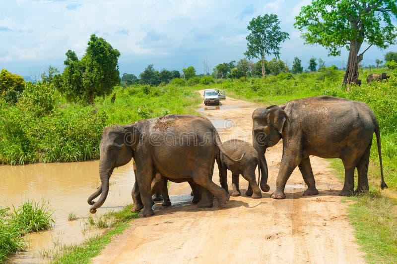 Группа в составе одичалые слоны стоковая фотография rf