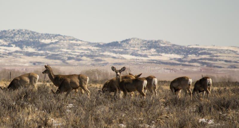 Группа в составе олени осла стоковое изображение rf