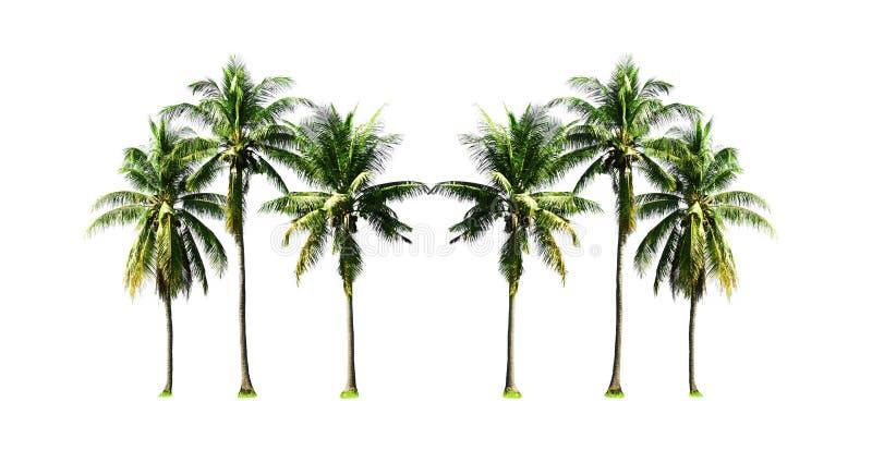 Группа в составе пальмы кокоса растя вверх на пляже моря на острове Пхукета к югу от Таиланда изолировала на белой предпосылке стоковое фото