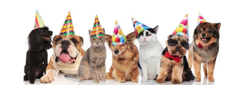 Группа в составе 7 прелестные коты и собак на вечеринке по случаю дня рождения стоковое фото