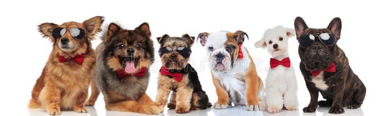 Группа в составе 6 прелестных собак различных пород нося bowties стоковое фото rf