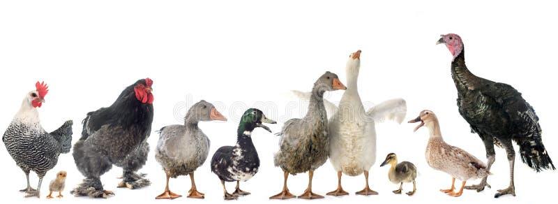 Группа в составе птица стоковые фото