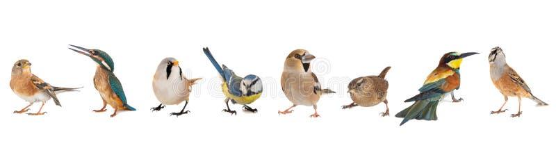 Группа в составе птицы изолированные на белой предпосылке стоковое фото