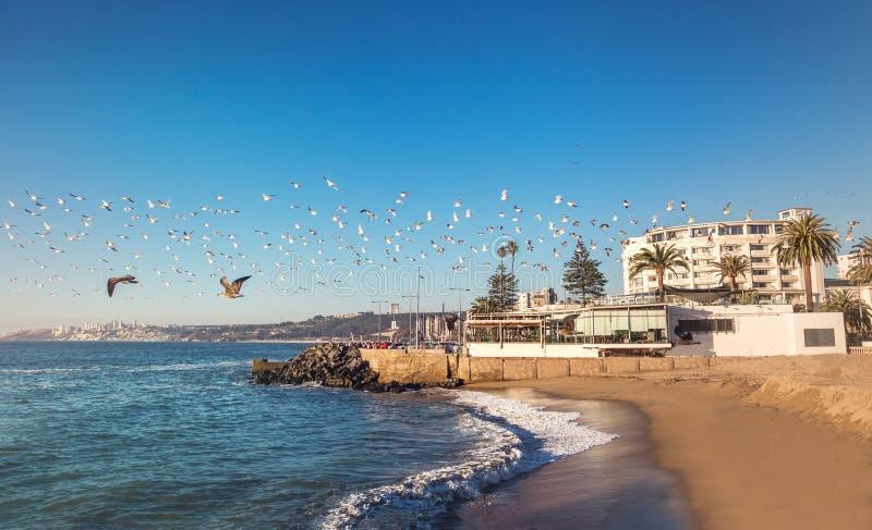 Группа в составе птицы летая на заход солнца - Vina Del Mar, Чили стоковые изображения
