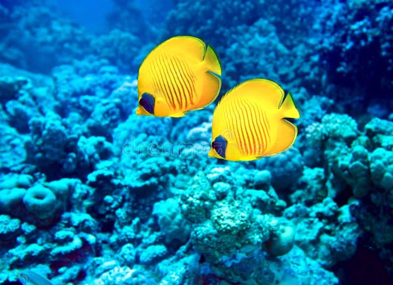 Группа в составе рыбы коралла в воде. стоковые фото
