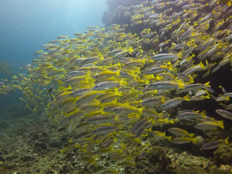Группа в составе рыбы плавая стоковое изображение