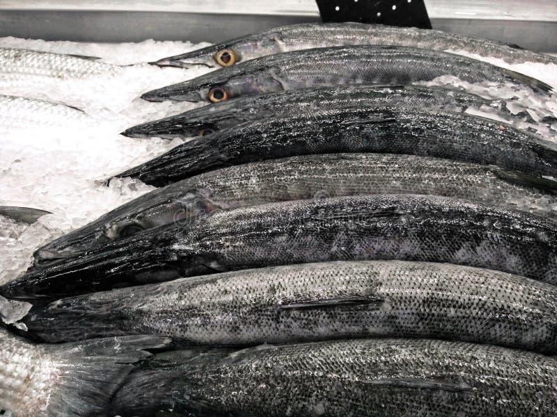 Группа в составе свежая барракуда на льде стоковое фото rf