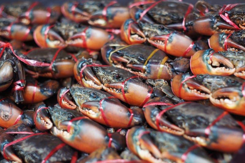 Группа в составе свежие живые крабы связанные с красной пластиковой веревочкой на ФОКУСЕ рынка морепродуктов ВЫБОРОЧНОМ стоковая фотография rf