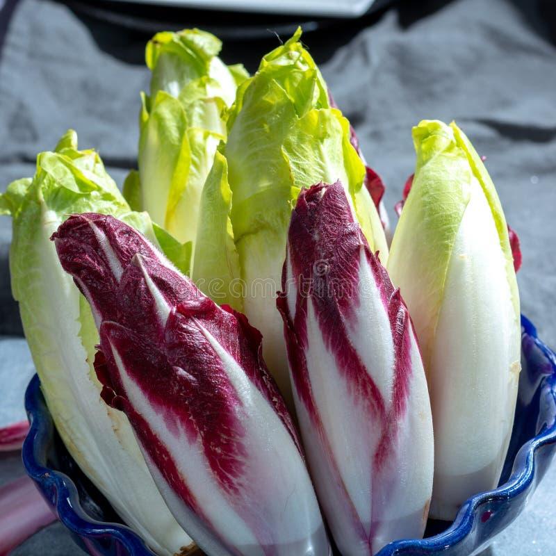 Группа в составе свежие зеленые бельгийский эндивий или цикорий и красные овощи Radicchio, также известная как salade witlof стоковые фото