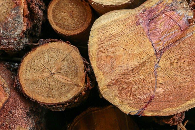 Группа в составе стог смолы хоботов тонкий толстый спиленный покрытый журналов кончает дизайн eco предпосылки низкопробный дереве стоковые изображения rf