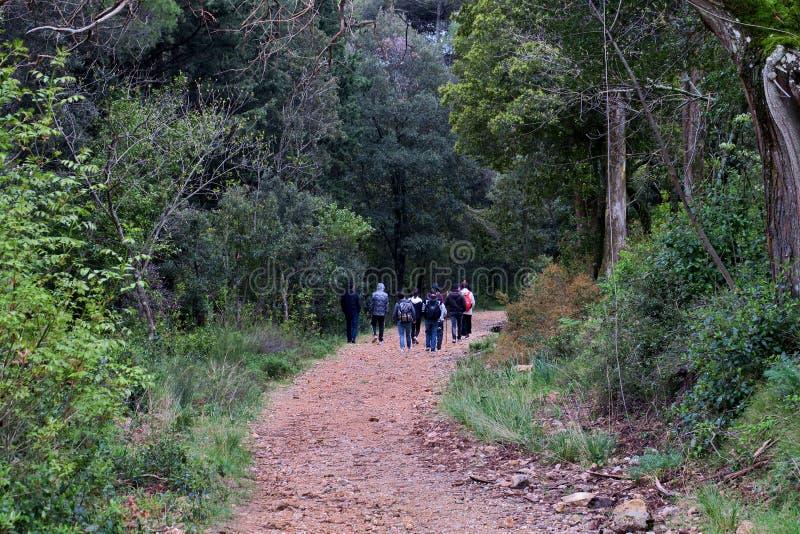Группа в составе туристы в прогулке леса вдоль узких путей стоковое изображение rf