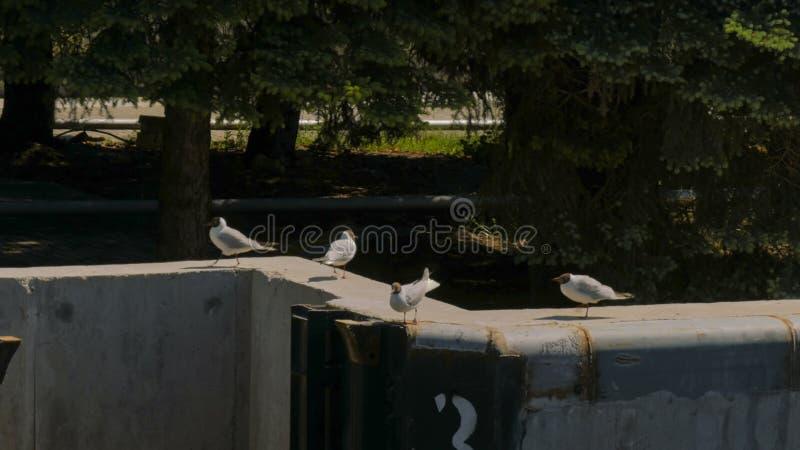 Группа в составе чайки идет на конкретную пристань стоковые изображения