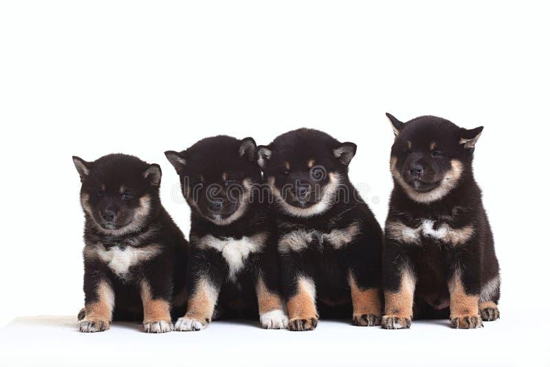 Группа в составе щенята стоковое изображение rf