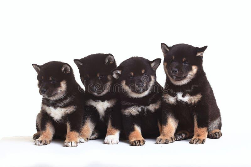 Группа в составе щенята стоковое изображение