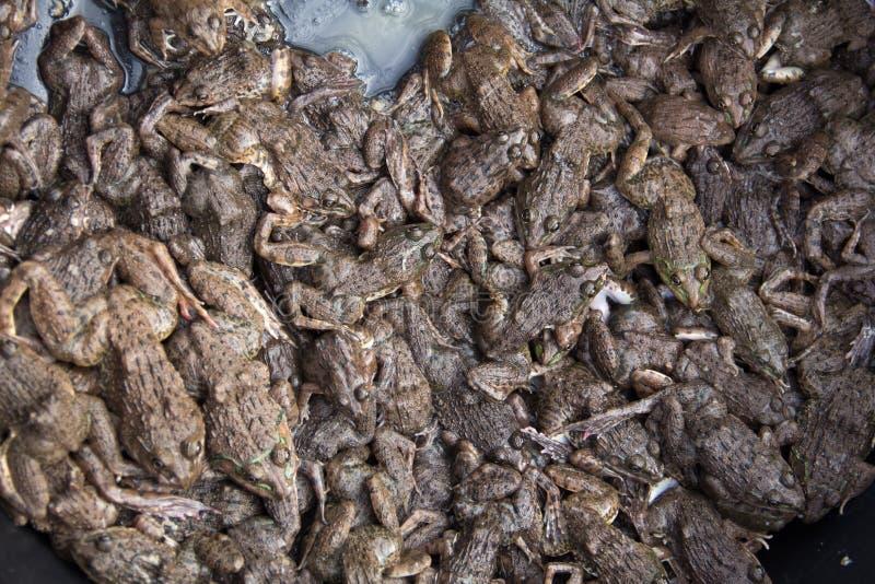 группа в составе лягушки в азиатском местном рынке стоковое изображение rf