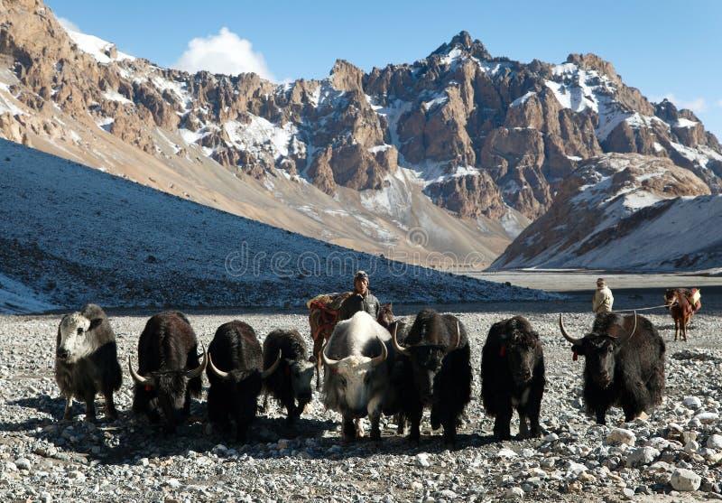 Группа в составе яки в больших гималайских горах стоковая фотография rf