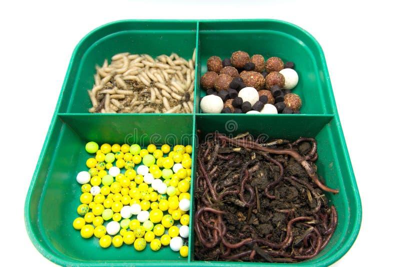 Группа в составе earthworms стоковое фото rf