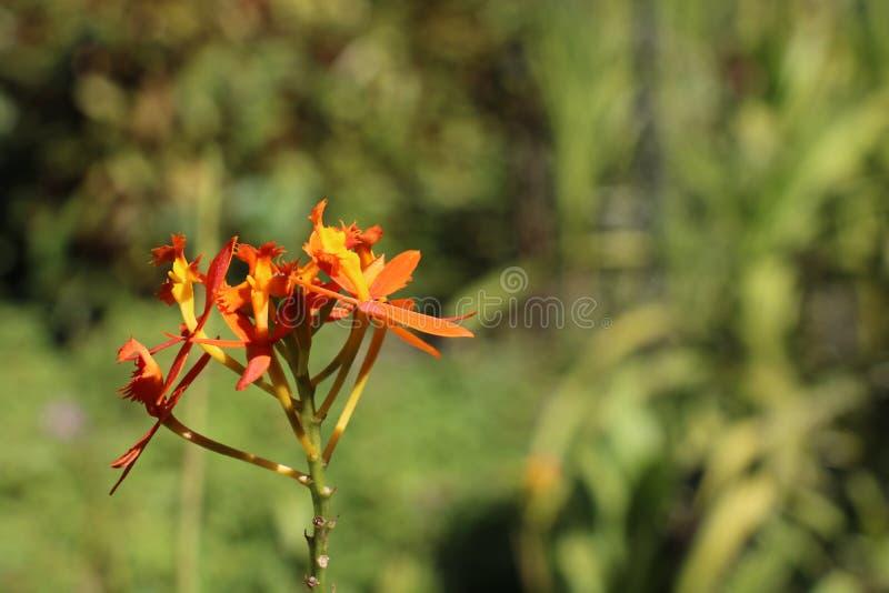 Группа оранжевых цветков стоковое изображение rf