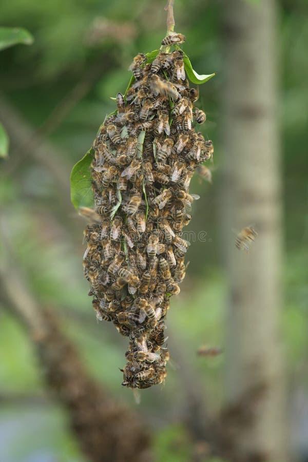 группа пчелы стоковое изображение rf