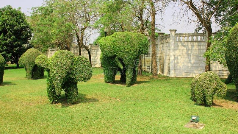 Группа слона фигурной стрижки кустов в парке стоковое изображение rf