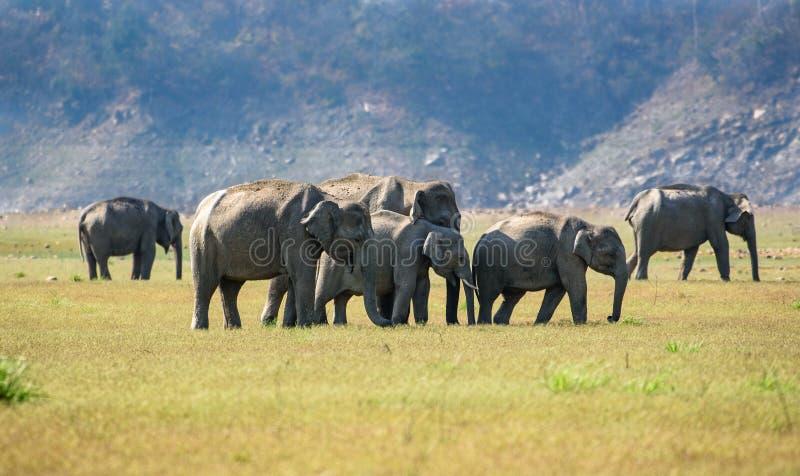 Группа слона стоковая фотография