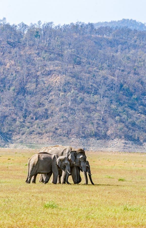 Группа слона стоковое фото rf