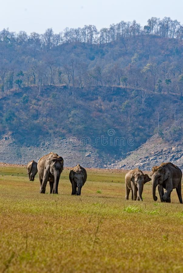 Группа слона стоковое изображение rf