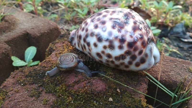 Группа seashells друзей природы животных стоковое фото