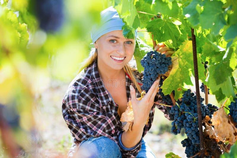 Группы вырезывания женского персонала виноградины вина стоковое фото rf