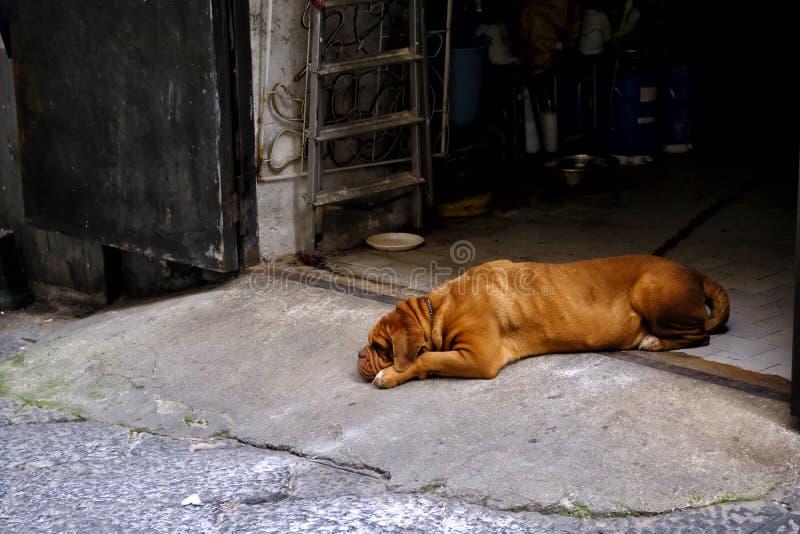 Грустная большая собака где-то в улице стоковое фото