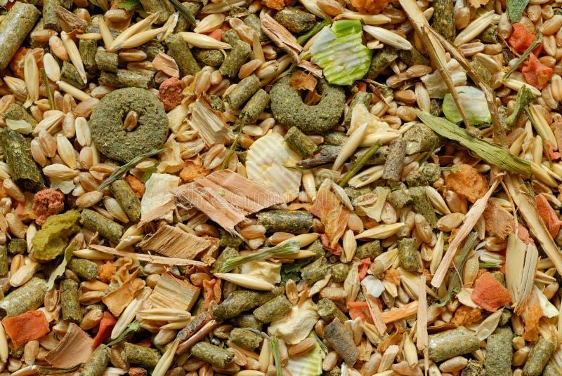 грызуны еды стоковое изображение rf