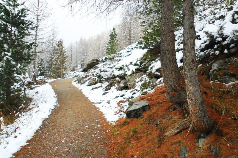 Грязная улица вдоль покрытого снег горного склона в coniferous лесе стоковые фото