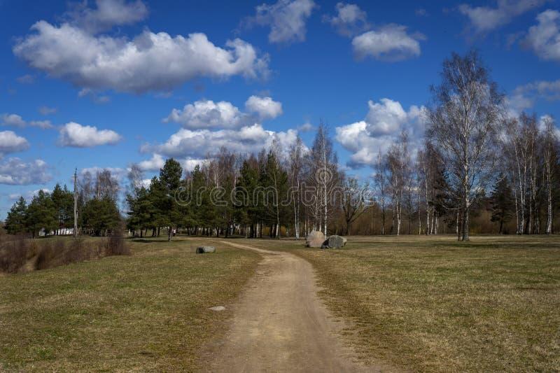 Грязная улица водя к деревьям полесья в сельской местности стоковая фотография