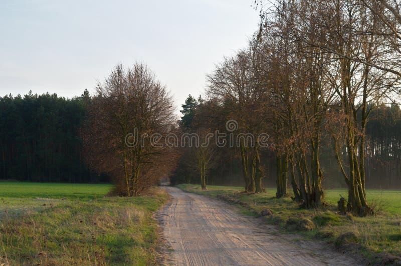 Грязная улица к лесу стоковая фотография rf