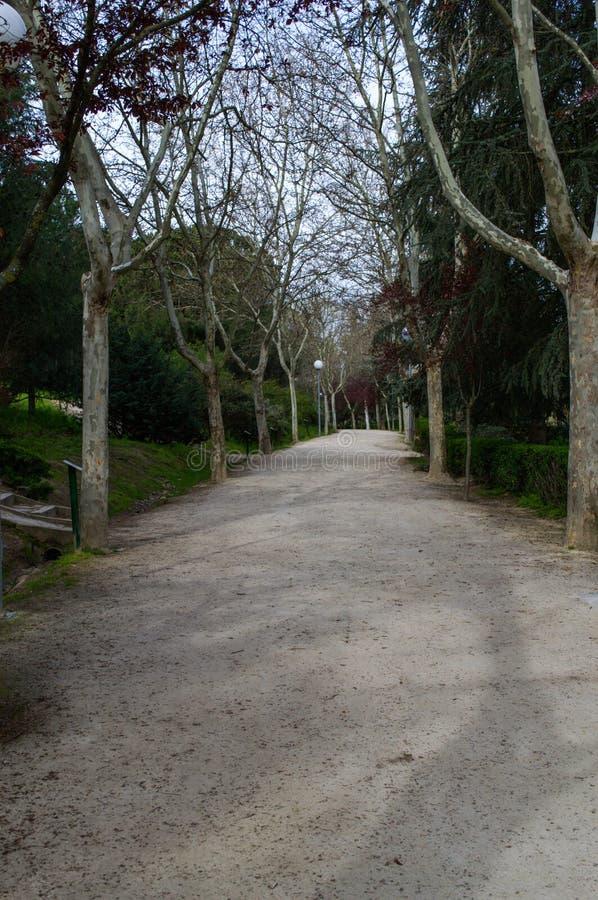 грязная улица между деревьями стоковые изображения rf