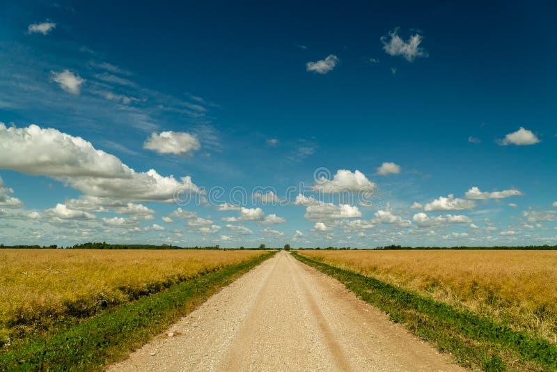 Грязная улица окруженная аграрными полями со славным голубым небом в предпосылке стоковая фотография