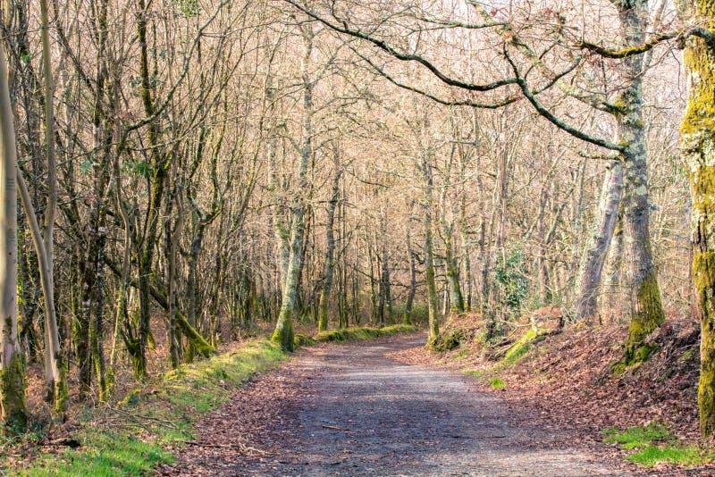 Грязная улица покрытая листьями окруженными деревьями стоковые изображения