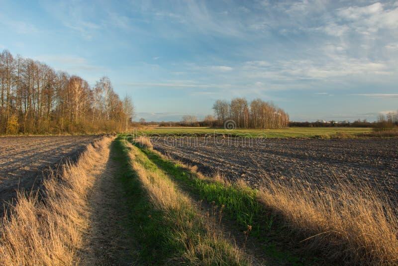 Грязная улица с зеленой и сухой травой через вспаханные поля, рощей с деревьями без листьев и облаками на голубом небе стоковое изображение rf